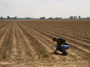 me checking soybean depth