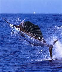Swordfishing in Ecuador
