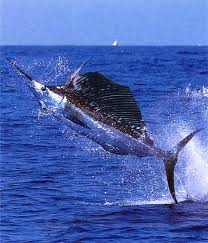 Swordfishing in Ecuador