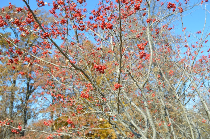 Fall foliage in arkansas
