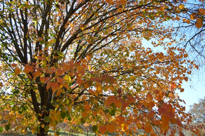 Fall colors and trees 2012