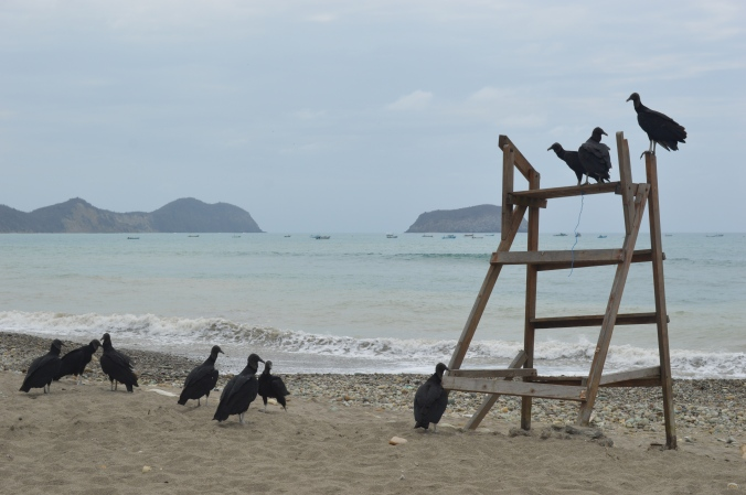 Vultures on the beach.